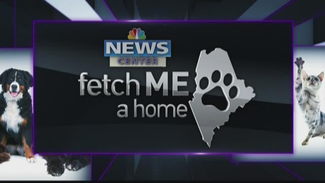 Fetch Me a Home 02-07-16