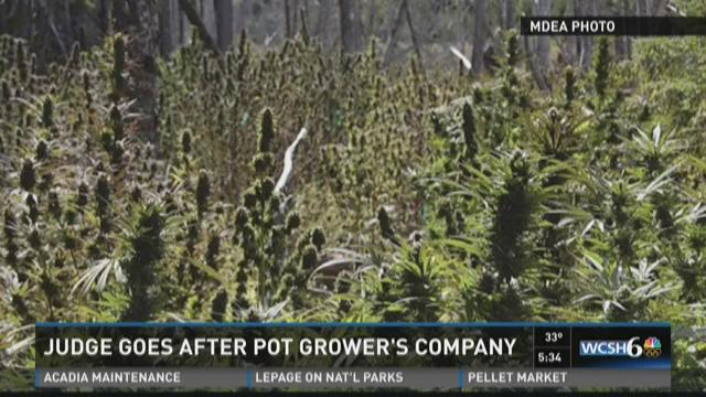 Pot farm sentencing delayed