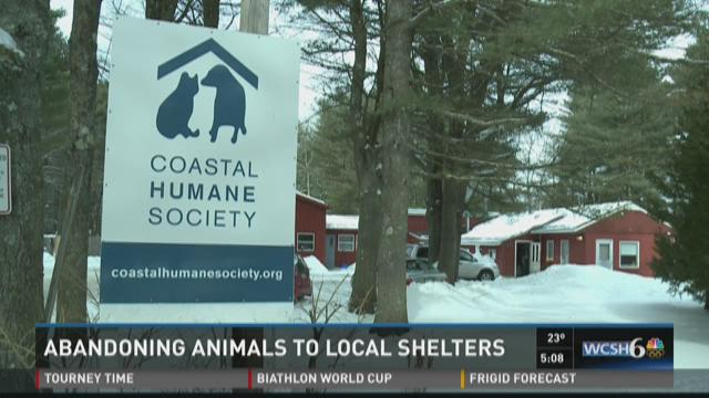 Stopping abandonment of animals outside of animal shelters