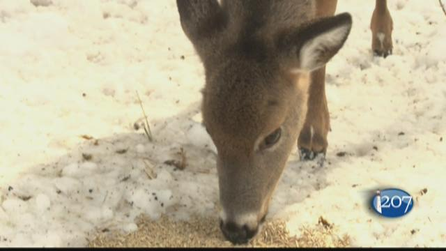 Brownville Food Pantry For Deer