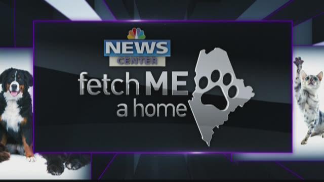 Fetch Me a Home 02-14-16