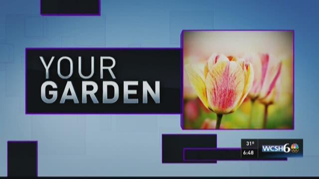 Your Garden 04-30-16