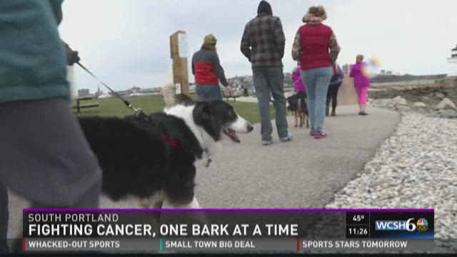 Fighting cancer, one bark at a time