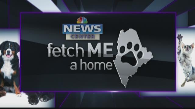 Fetch ME a Home